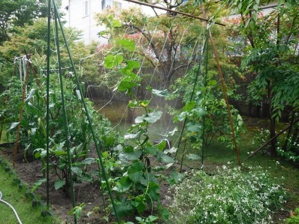 家庭菜園 Ⅲ