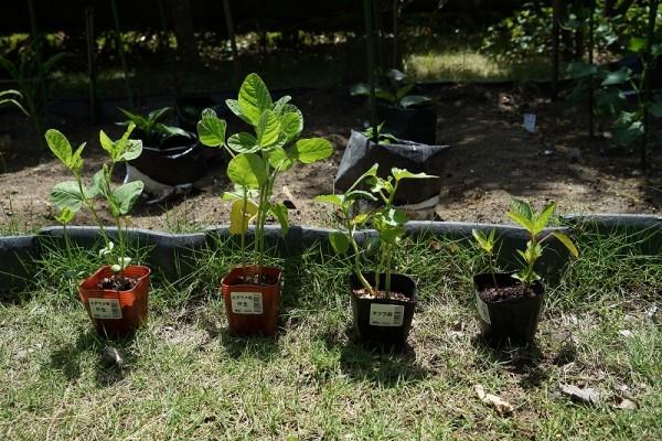 家庭菜園 Ⅱ